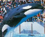 Hoi Wai The Whale