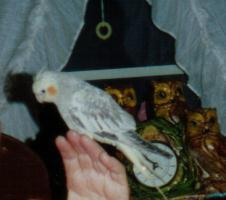 Pretty Bird Shetley