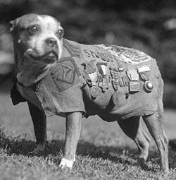 Sgt Stubby
