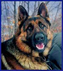 Roy <i>the Dog</i> Fava