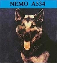 War Dog Nemo
