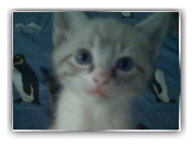 Skeeter Cat