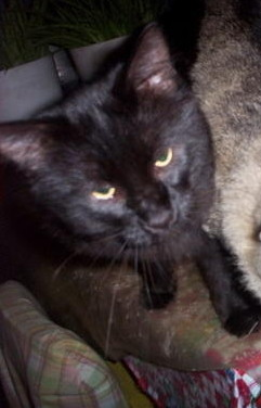 Blackie Cat