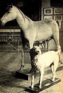 Napoleon's Dog