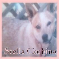 Estrilita Cochina Stella Capps