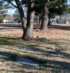 Halstead Cemetery (Owned by Tidewater Cemetery)