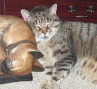 Little Missy Lulu Little Stripey Cat