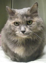 Christian <i>Cat</i> Bilhimer