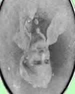 Alice Pauline <i>Trapier</i> Hayne
