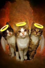 Annie's (Tiny,Bitty and Peanut) Kittens