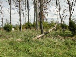 Rader/Bowman/Worland Cemetery