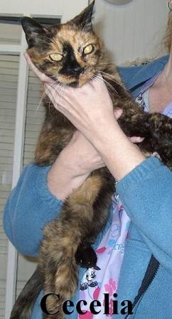 Cecelia The Cat