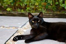 Mr. Black The Cat