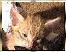 Skeeter Bachman Cat