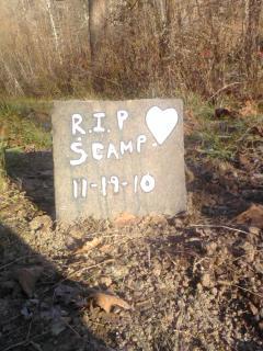Scamp Scampers Alexander