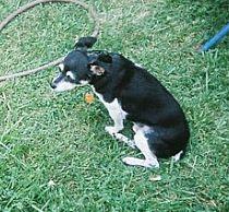 Louis James Dog
