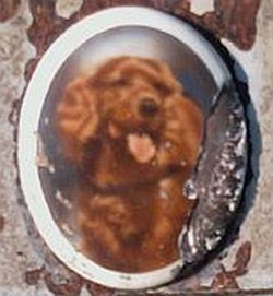 Flip Dog