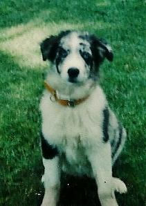 Rattle <i>The Dog</i> Hanson