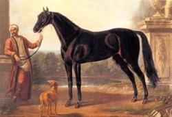 Byerley Turk The Horse