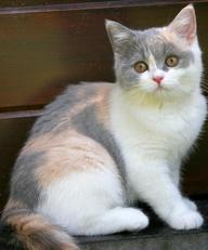 Paper Kitten