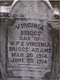 Virginia Briggs Adams