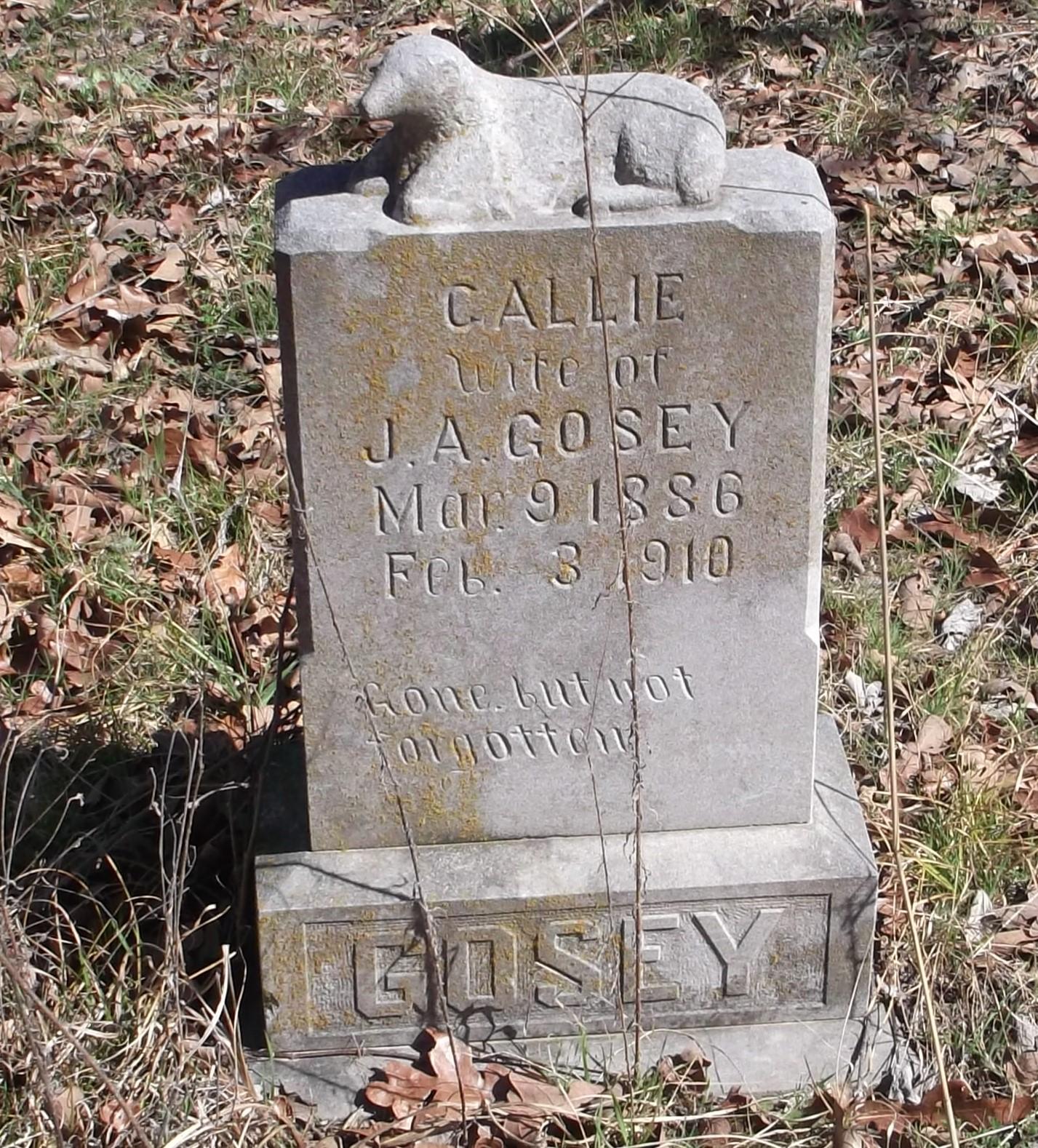 Callie Gosey