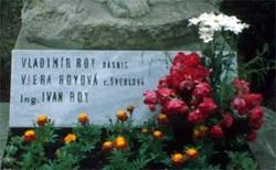 Vladimir Roy