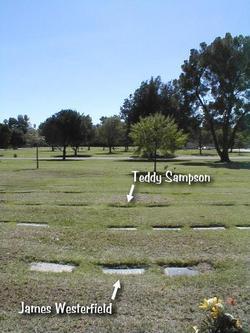 Teddy Sampson