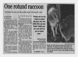 Bandit The Raccoon