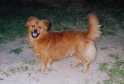 Sport Dog