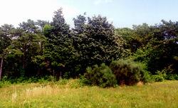 Daggett Burial Ground