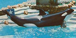Kandu The Whale, I