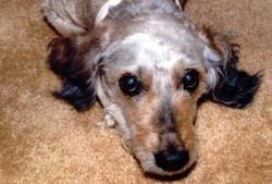 Cookie Dog Leon