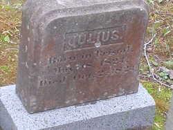 Julius D'wolf