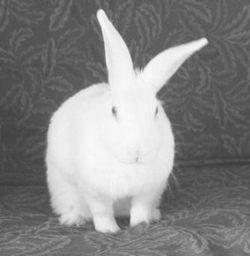 Bunny - - - -