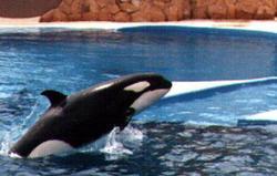 Belen The Whale