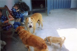 Dog: Gidget