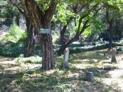 Trinity County Cemetery