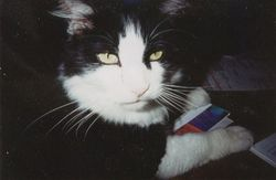 Micky The Cat