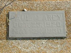 Paul M Arey