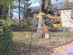Scofield Cemetery #1