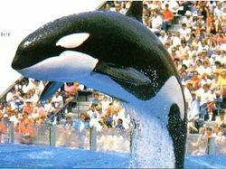 Kandu The Whale, V