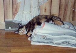 Miss Agnes <i>Cat</i> Frosch