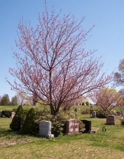 New Pine Grove Cemetery
