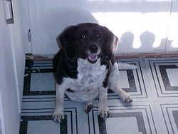 Lady The Dog