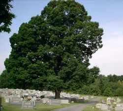 Shady Grove Wesleyan Church Cemetery