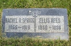 Ellis Rees