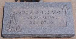 Acacia Spring Avant