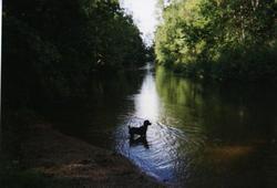 Linsey Lou Dog