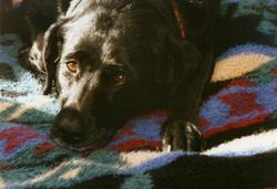 Roxey Dog